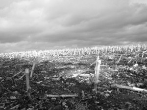 one world thrown away